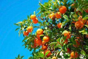 オレンジ5b
